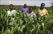 Rice farmers in Malawi